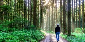 Dlaczego spacer po lesie korzystnie wpływa na nasze zdrowie