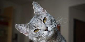 Kuwety dla kota - jakie najlepiej wybrać?