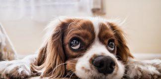 Jak powinien jadać pies?